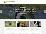 Bouvier-bernois.com